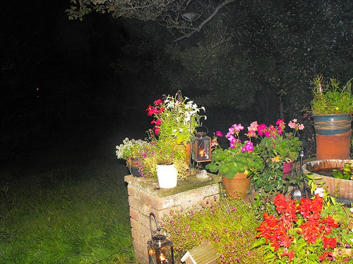garden-at-night